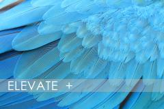 CC Elevate